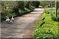 SY0896 : Geese at Taleford by Derek Harper