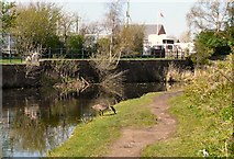 SJ9495 : Peak Forest Canal by Gerald England