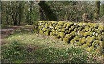 SX7070 : Wall, Hannaford by Derek Harper