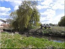 SJ9223 : River Sow, Riverway Meadow by David Dixon