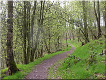 SK2263 : Woodland footpath in the spring by Andrew Hill