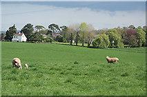 ST0107 : Cullompton: towards Trumps Barn by Martin Bodman