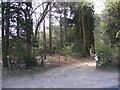 TG1718 : The entrance to Felthorpe Forest Nursery by Adrian Cable