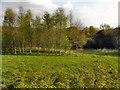 SD7313 : Ousel Nest Meadows by David Dixon