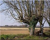 SU5751 : Farmland north-west of Oakley by Graham Horn