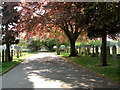 TM1745 : Ipswich Old Cemetery - the main driveway by Evelyn Simak