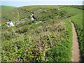 SX4149 : Coast path above of Polhawn Cove by Philip Halling