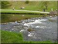SK1551 : River Dove by Tony Bacon