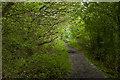 SD5507 : A woody footpath near Standish Lower Ground by Ian Greig