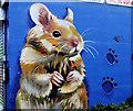 J3773 : Pet shop advertisement, Belfast by Albert Bridge