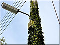J2358 : Ivy, Hillsborough by Albert Bridge