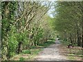 SY0382 : NCN 2 passing woods near Castle Lane by David Smith
