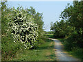 TQ5483 : Path, Hornchurch Country Park by Robin Webster