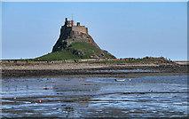 NU1341 : Lindisfarne Castle by Peter McDermott