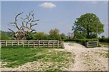 TQ2643 : Dead tree and gateway by Ian Capper