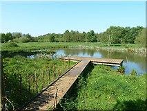 TL0536 : Pond, Flitton Moor by Paul Buckingham