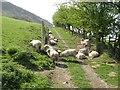 SO2676 : Hot sheep by Jonathan Wilkins