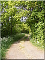 TM2766 : Box Bush Lane footpath to Severalls Lane by Adrian Cable