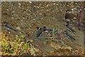 TM0614 : Sand Martins by Glyn Baker
