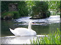 SU0725 : Swan, River Ebble by Maigheach-gheal