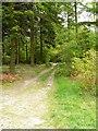 SO5205 : Footpath leading to Pen-y-Fan by Claire Seyler