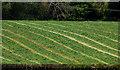 J3067 : Field, Drumbeg by Albert Bridge