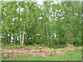 SE6549 : Grimston Wood by JThomas