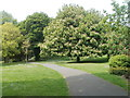 ST3087 : Horse chestnut tree in full bloom, Belle Vue Park, Newport by Jaggery