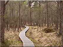 NM8464 : Boardwalk in Ariundle Oakwood by Trevor Littlewood