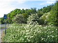 SP3078 : May blossom, cow parsley and road signs by E Gammie
