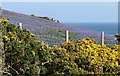 SW9480 : Bluebells and gorse above Downhedge Cove by Derek Harper