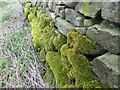 SE0899 : Moss on the wall, Marrick by Maigheach-gheal
