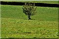 J4577 : Tree, Craigantlet/Bangor by Albert Bridge