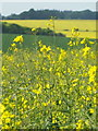 SU0725 : Ripening oilseed rape, Faulston by Maigheach-gheal
