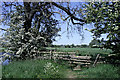 SK4530 : Stile surrounded by hawthorn blossom by David Lally