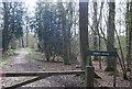TQ0133 : Wey South Path through Sidney Wood by N Chadwick