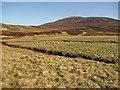 NN9379 : Grassy haughs beside the Tarf by Richard Webb