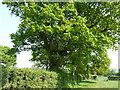 TQ2818 : Tree house near Danworth Farm by Dave Spicer