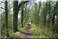 TQ0233 : Wey South Path by N Chadwick