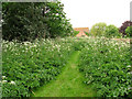 TG0834 : Path through the cow parsley by Evelyn Simak