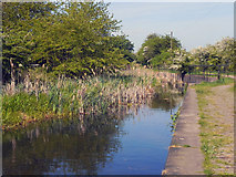 SD7909 : Manchester, Bolton and Bury Canal by David Dixon