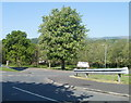 ST2890 : Deciduous trees, Blackwater Close, Bettws, Newport by Jaggery