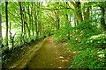 SP8300 : Path through Monkton Wood by Graham Horn