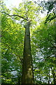 SP8401 : Tree in Hampden Common by Graham Horn