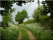 SK5276 : Track, formerly Old Hall Lane by Andrew Hill