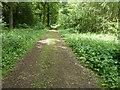 SU9923 : Bridleway 653 in Pondtail Copse by Dave Spicer