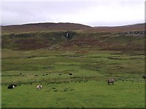 NG4162 : Grazing Cattle at Balnaknock by Hilmar Ilgenfritz