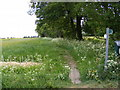 TM2955 : Footpath to Walnuts Lane by Adrian Cable
