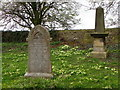 NZ2305 : Primroses, Church of St Michael's and All Angels by Maigheach-gheal