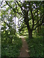 TM2446 : Footpath to the A12 Martlesham Bypass over Martlesham Heath by Geographer